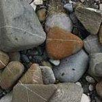 steinlinien